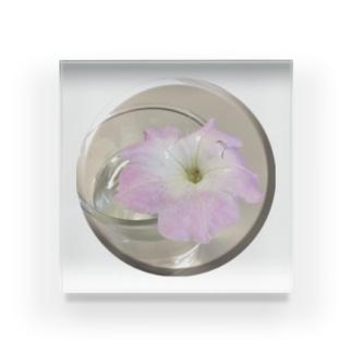 名もない花 Acrylic Block