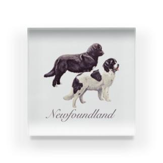 ニューファン Newfoundland Acrylic Block