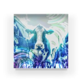牛170527b Acrylic Block