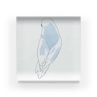 見返り美人マメルリハちゃん【まめるりはことり】 Acrylic Block