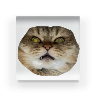 猫ネコショップの猫ネコ(顔) Acrylic Block