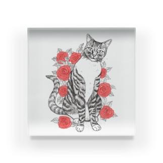 猫とバラ Acrylic Block