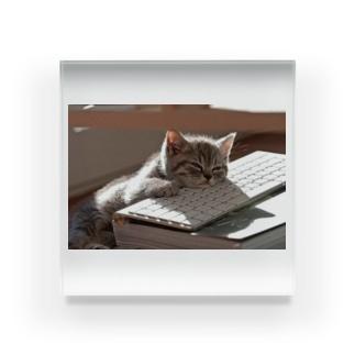 眠る猫 ねこ cat Acrylic Block