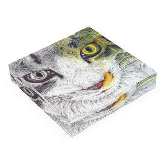 ボールペン画/カラーボールペン画 Acrylic Block