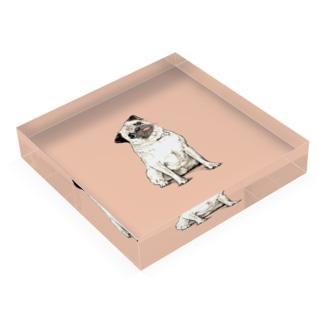 パグのだいきち② Acrylic Block