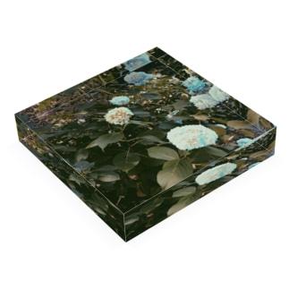 紫陽花の色 Acrylic Block