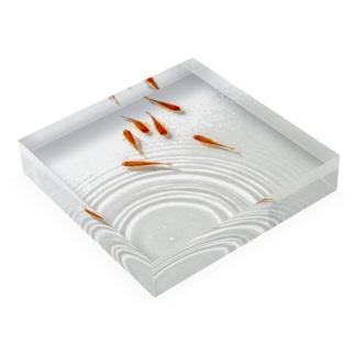 泳ぐ金魚 Acrylic Block
