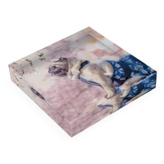 SAKURAパグ Acrylic Block
