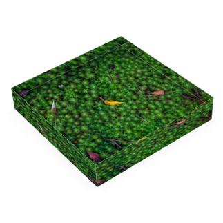 Block-Photo-Moss01 Acrylic Block