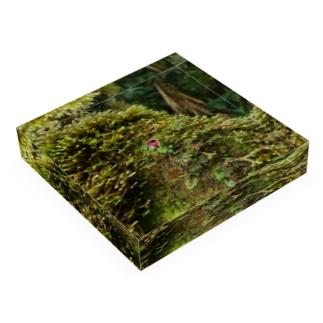雨林DesignのIN Situ_Corybas sp. Acrylic Blockの平置き