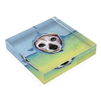 JAWS🦈 Acrylic Block