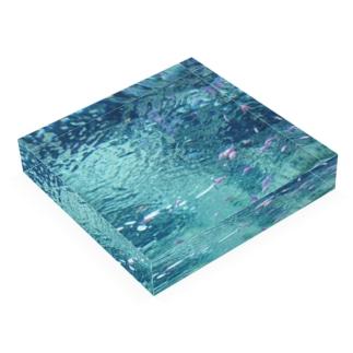 ピンクパープル熱帯魚 Acrylic Block