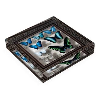 標本箱のアクリルブロック Acrylic Block