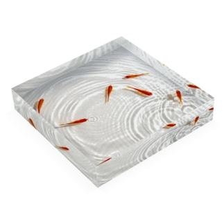 泳ぐ金魚2 Acrylic Block