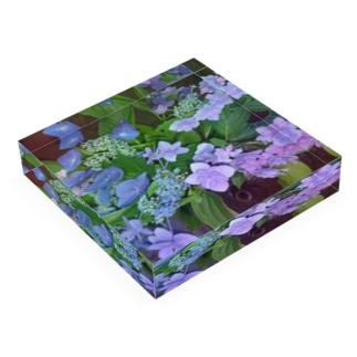 紫陽花(生花) Acrylic Block