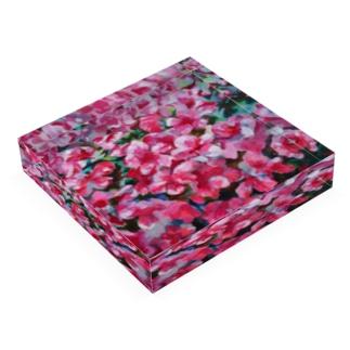 tsutsuji Acrylic Block