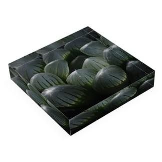 ハオルチア オブツーサ系4「ドドソン紫オブツーサ」 Acrylic Block