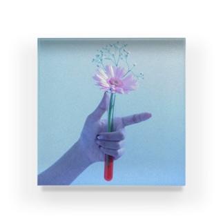 ピンクの花とかすみ草 Acrylic Block