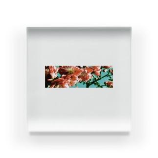 花曇り Acrylic Block