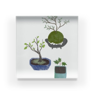 ボタニカル 鉢植えと苔玉 アクリルブロック