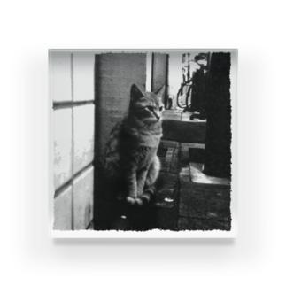 冬猫さん Acrylic Block