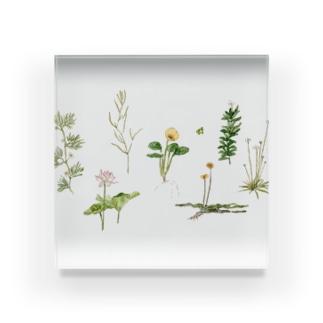 水草と花 Acrylic Block