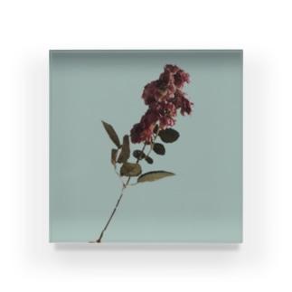 私の温かい花 Acrylic Block