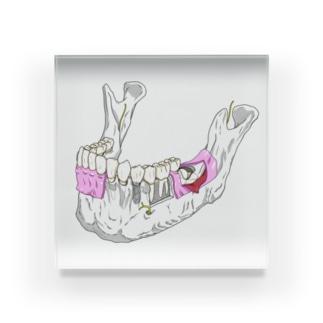 下顎骨解剖カラー アクリルブロック