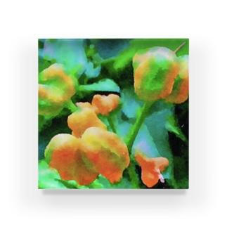 黄い実 Acrylic Block