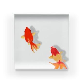 住みつく金魚 Acrylic Block