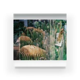 Cactus Heaven Acrylic Block
