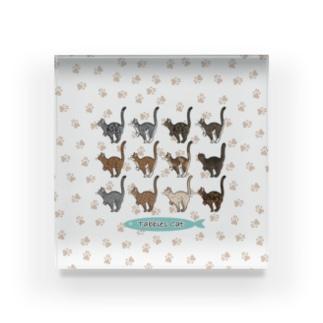 豆つぶのTabbies Cat(集合/肉球ver) Acrylic Block