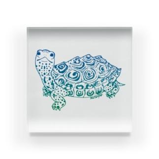 ダイヤモンドバックテラピン 青緑  Acrylic Block