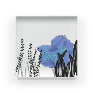 *カリブー* Acrylic Block