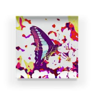 溶け込む蝶 Acrylic Block