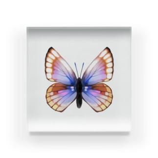 蝶々 Acrylic Block