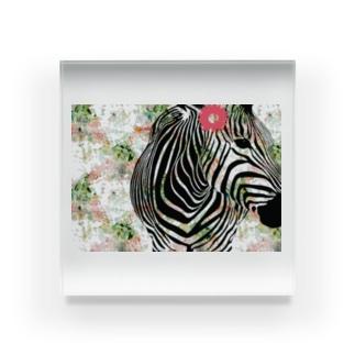 縞 ウマ子 Acrylic Block