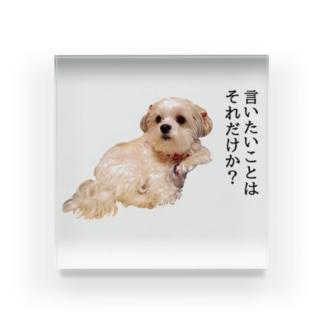 謙虚さ控えめのうちの犬 Acrylic Block