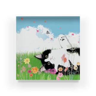 【白黒猫】 Acrylic Block