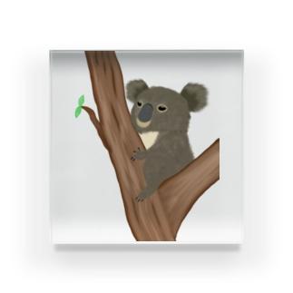 コアラ 抱っこあら Acrylic Block