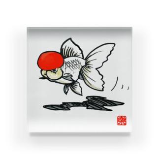 【金魚】 丹頂~カッコイイ顏してみた~ アクリルブロック