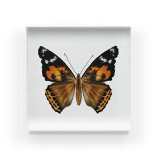 アクリルブロック:アカタテハ Acrylic Block