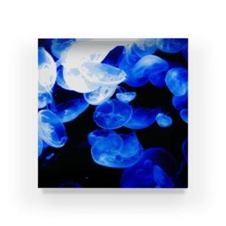 ミズクラゲ【クラゲシリーズ】 Acrylic Block