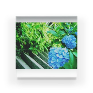 紫陽花向こうの階段 Acrylic Block