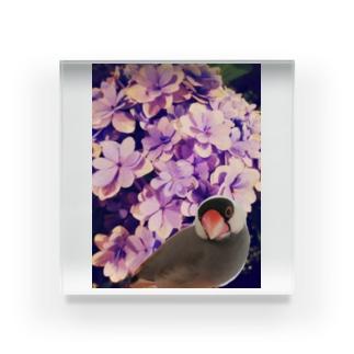 ノスタルジーな紫陽花と文鳥さん Acrylic Block