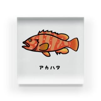 脂身通信Zの【魚シリーズ】アカハタ♪2107 Acrylic Block