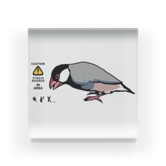 文鳥サウルス アクリルブロック