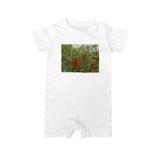 ミニトマト収穫前 Baby rompers