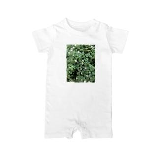多肉植物♡ブロウメアナ Baby rompers