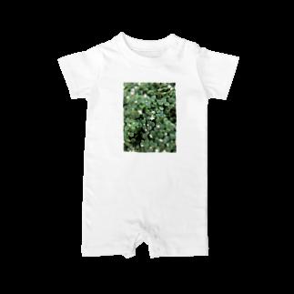 reonamamaの多肉植物♡ブロウメアナ Baby rompers